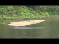 @WillCFish #Fishing Tips and Tricks #2012 - Google+