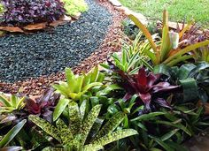 Part of my bromeliad bed in my small south Florida garden.