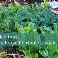 Raised Urban Gardens - Taking Gardening to a Whole New Level!