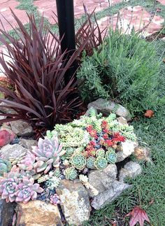 Succulent variety with flax plant and lavender in rock garden pathway #landscapefrontyardwithstone