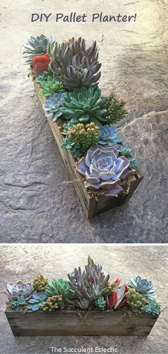 DIY Pallet Planter for Succulents DIY Pallet Planter filled with succulents step-by-step tutorial to make this cool succulent planter. Pin now read later and Enjoy! The post DIY Pallet Planter for Succulents appeared first on Pallet Diy. Cool Succulents, Succulent Planter Diy, Succulent Gardening, Succulents In Containers, Garden Planters, Planting Succulents, Organic Gardening, Planting Flowers, Propagating Succulents