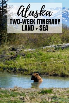 Yes, you can independently plan a trip to Alaska and save a ton of money compared to cruise tours. See state highlights on this perfect 2 week Alaska itinerary. Alaska National Parks, Glacier Bay National Park, Alaska Travel, Travel Usa, Alaska Trip, Visit Alaska, Banff, Quebec, Glacier Bay Alaska