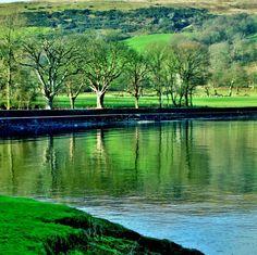 Reflecting Trees Scotland by James Bullis-King