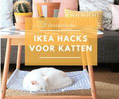 7 IKEA hacks die je kat fantastisch zal vinden | DierenDokters