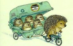 Drawing by Peter Cross.hedgehogs are the gardeners' friend because they eat slugs, beetles, caterpillars and insects.and they do no harm. This is such a cute illustration! Illustration Mignonne, Art Mignon, Children's Book Illustration, Hedgehog Illustration, Cute Art, Illustrators, Cute Pictures, Character Design, Cute Animals