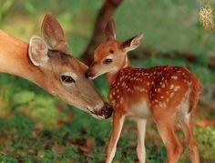 Bambi e sua mãe =)