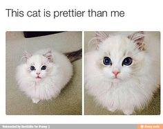 This cat is prettier than everyone I know / iFunny :)