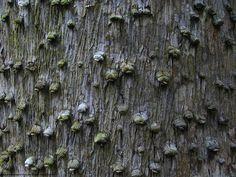 tree textures - Google Search