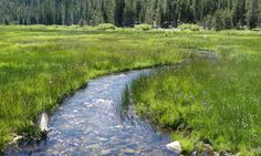 CALIFORNIA LAW RECOGNIZES MEADOWS AND FORESTS AS WATER INFRASTRUCTURE