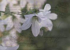 Postkarte aus Karton , www.gartenbijoux.ch/karten