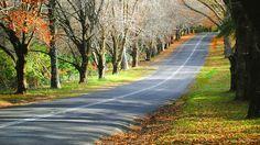 Straße in Neu England während des Indian Summer [Foto: Pixabay]