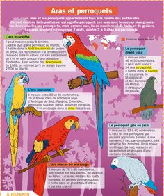 Educational infographic : Fiche exposés : Aras et perroquets Animals For Kids, Animals And Pets, Montessori, French Practice, Study French, Ara, French Expressions, French Classroom, French Resources