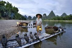 Photo by @alisonwrightphoto // Fisherman at dawn with cormorants Li River Yangshuo China. From the book I photographed for National Geographic Traveler on China.  For more information visit: http://ift.tt/1KIU08y ....... #alisonwright #facetoface #portrait #fish #fisherman #liriver #china #natgeotravel #natgeocreative #natgeo by natgeotravel