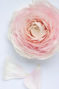 There are ranunculus....and then there are CLONI ranunculus! | Flowerona