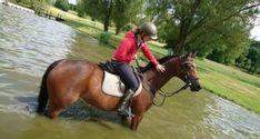 EQWO #Glücksmomente, 02. Dezember   Julia Jordan  #glücksmoment #adventkalender #pferdeliebe #pferd #pferdefotografie Horses, Animals, December, Animais, Animales, Animaux, Animal, Horse, Dieren