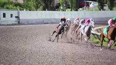 Horses in 1200 FPS Super Slow Motion at Hastings Race Track - Frank & Je...