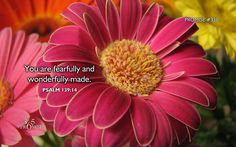 Psalm 139:14 WEB  I will give thanks to you, for I am fearfully and wonderfully made. Your works are wonderful. My soul knows that very well.
