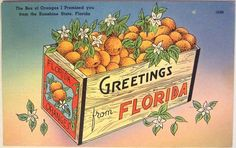 3. Oranges Clearwater Florida, Sarasota Florida, Vintage Florida, Old Florida, Florida Travel, Beach Travel, Sanibel Island, Posters Vintage, Vintage Postcards