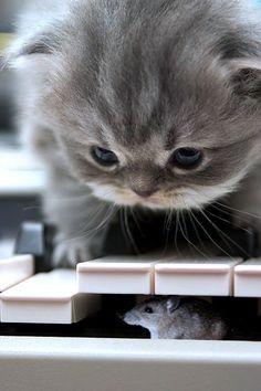 Eu acho que eu vi um ratinho. ..