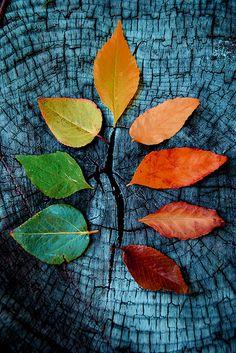 autumn  fazer uma árvore, ir fazendo, com as folhas que apanhar diferentes