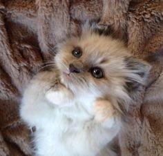 What a little cutie !!
