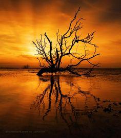 Summer Sunet by Abdulmajeed  Aljuhani on 500px