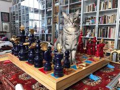 "698 Me gusta, 18 comentarios - Pedro Friedeberg (@pedrofriedeberg) en Instagram: ""#Netflixthecat #Netflix #chess #chess lovers #pedrofriedeberg #catsofinstagram #cats…"" Jorge Martinez, Netflix, Cats, Animals, Instagram, Gatos, Animales, Animaux, Animal"
