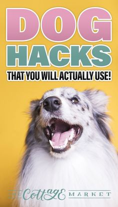 Dog Hacks That You Will Actually Use! These little tricks will make your life and your dogs life easier and more fun! Check them out. # Dogs hacks Dog Hacks That You Will Actually Use Getting Rid Of Skunks, Pill Pockets, Frozen Dog, Dog Smells, Diy Dog Toys, Dog Safety, Dog Hacks, Dog Crate, Dog Mom