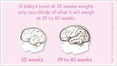 Do you know why babies need at least 39 weeks to grow and develop before being born?
