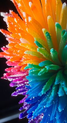 Rainbow Wet Flower