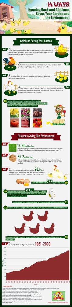 Tips on keeping chickens in your back garden.