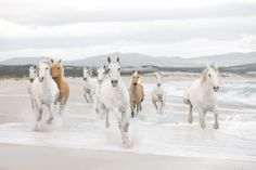 white and tan horse galloping on a beach - Canvas Wall Scroll Poster inches) Beautiful Horse Pictures, Most Beautiful Horses, Pretty Horses, Horse Wallpaper, Beach Wallpaper, Hd Wallpaper, Photo Wallpaper, Strand Wallpaper, Animal Wallpaper