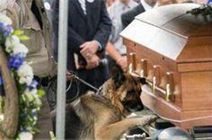 Politiehond eert partner op begrafenis. Ook dieren rouwen.