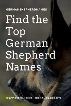 Find the top german shepherd names in our site #topgermanshepherdnames #topgsdnames