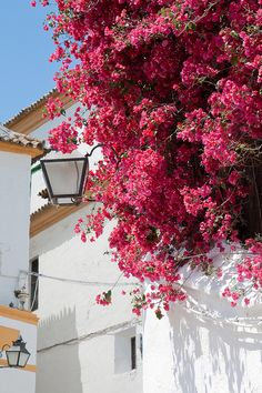 A beautiful corner in the city of Cordoba, Andalucia, Spain. www.costatropicalevents.com
