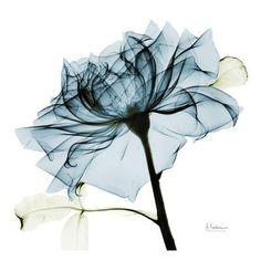 Blue Rose 2 Art Print by Albert Koetsier at Art.com