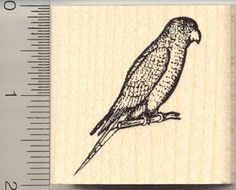 A lovely, detailed parakeet stamp! This is a deeply etched, finely detailed Rubber Stamp mounted on high quality white maple wood block with hourglass sides.