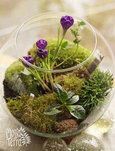forest moss terrarium with crocuses