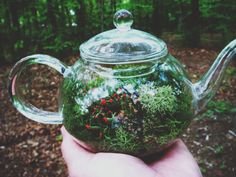 DIY Moss Terrarium. love this in the teapot. no info, just a pic, but I love it!!
