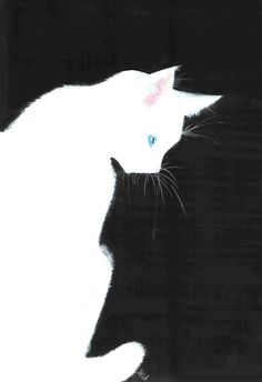 White Cat by Midniterain.deviantart.com