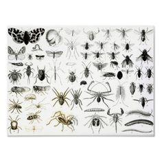Entomology, Myriapoda and Arachnida, English School | http://www.zazzle.com/entomology_myriapoda_and_arachnida_print-228199234281474686?size=%5B42.6656%2C32.0000%5D=value_posterpaper_matte=114445276501626923=113381087925757000=1.3333=bridgemanart=238706427652551388