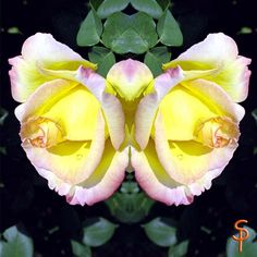 """Tauch ein in die Anderswelt """"Rosenschmetterling"""" 🌹🌹🌹 kreativesbypetra Petra, Plants, Plant, Planets"""