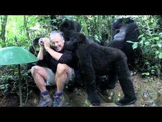 Encontrando Família de Gorilas na Selva