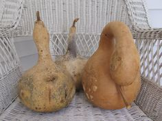 Natural Grown and Dried Gourds Set of 3 at Catbird Cottage $17.99