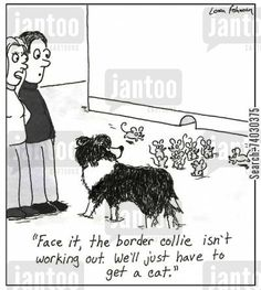 All Border Collies Border Collie Humor, Border Collie Art, Funny Dogs, Cute Dogs, Funny Animals, Aussie Puppies, Collie Mix, Crazy Dog, Cartoon Dog