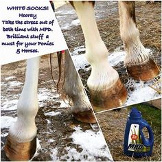 Why not follow me on #instagram?  #MPD Forever's multi purpose detergent can even be used on making them white #socks white again! Why not try it on your #saddlery? Such a great soft detergent that cuts through #dirt and #grime with none of the #harsh #products in! Making this the best multi purpose detergent in my eyes  #foreverliving #aloevera #products #livealittle #tryme #horse