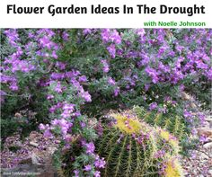 Flower Garden Ideas in the Drought