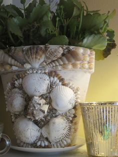 shell flower pot