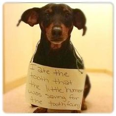 Nothing beats a dachshund shaming -- especially with a tooth fairy element.