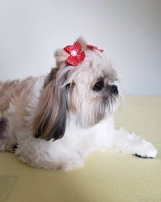 Shih Tzu Puppy, Dog Grooming, Bts Jungkook, Pasta, Fur, Puppies, Dogs, Nature, Beautiful Dogs